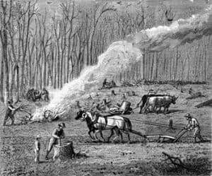 early settlers clearing the forests of Vermont. Drawing by Rowland Robinson.